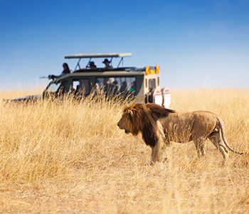 6D Experience South Africa + Mono Cape Town & Aquila Game Drive
