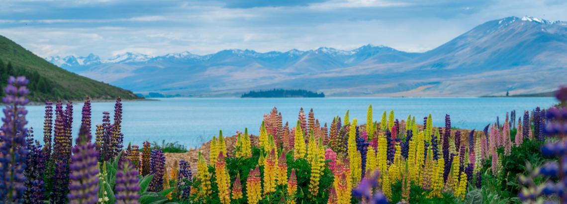 440 Gambar Pemandangan New Zealand HD Terbaru